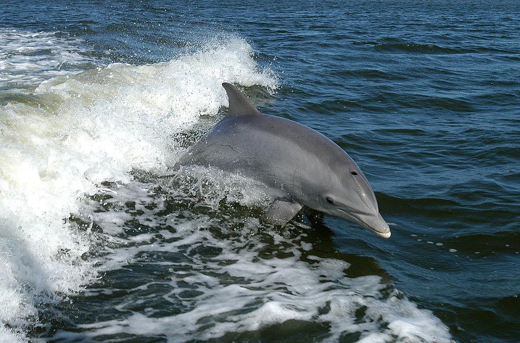 Estudio de cetáceos